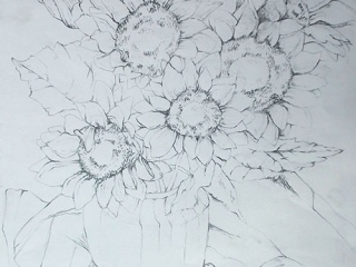 21-Basic-Drawing