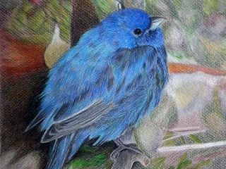 38-Colored-Pencil-Drawing